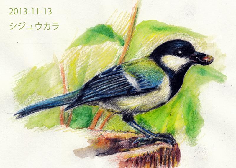 シジュウカラの画像 p1_28
